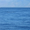 Whale breach during our snorkelling trip