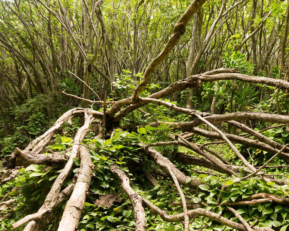 Dead Tree, Ha'ena State Park, HI