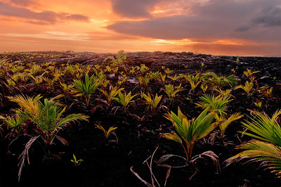 Sunset over the lava flow