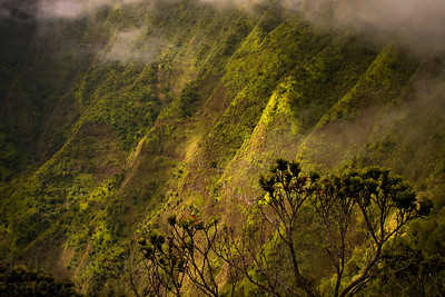 Scenes from the views of the Pihea Ridgeline on the island of Kauai.  Photo by Kyle Spradley | www.kspradleyphoto.com