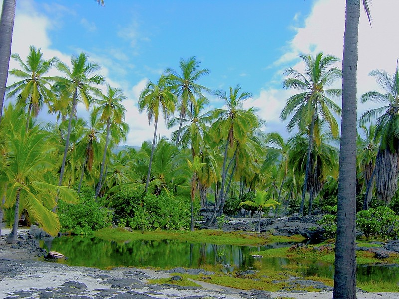 Coconut Trees and Lagoon