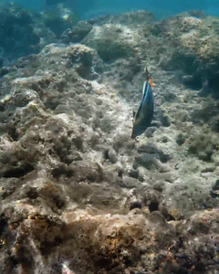 HI underwater-2