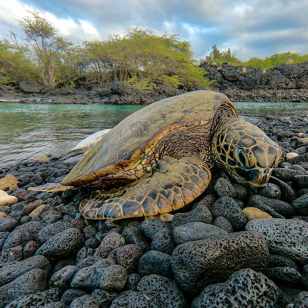 Turtle Nap!