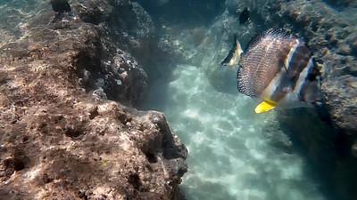 HI underwater-24