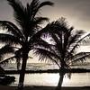 Palm Trees IV