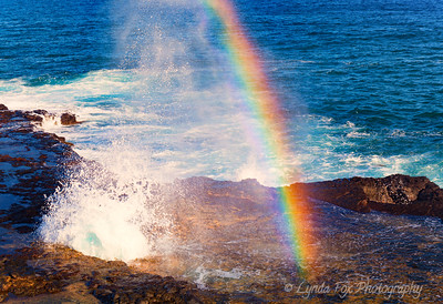 Blowhole Kissed By Rainbow