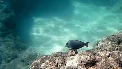 HI underwater-23