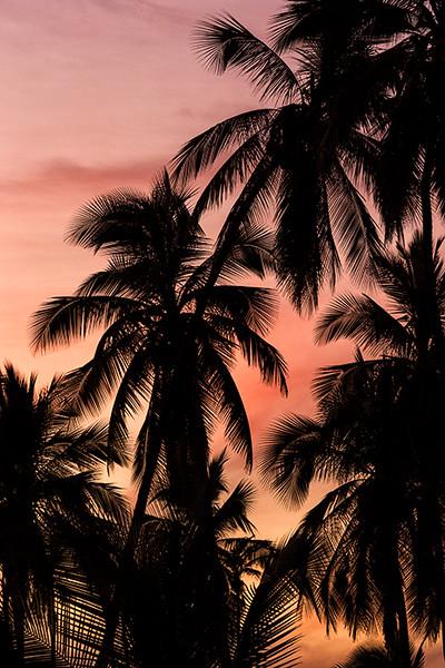 Kapuaiwa Grove, Kaunakakai, Molokai, Hawaii