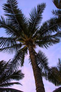Waikiki (4)
