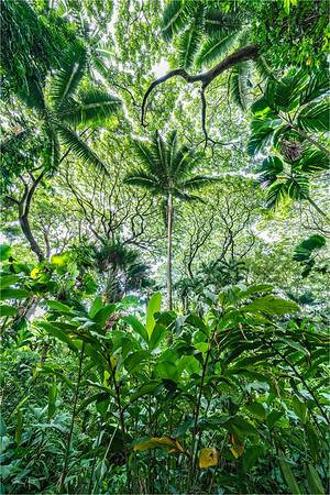 Looking Up, Hawaii Tropical Botanical Garden, Hawaii