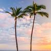 Ewa Beach Palm Trees