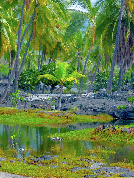 Little Coconut Tree  on Lagoon