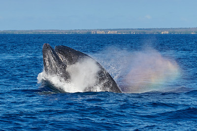 Whales and Rainbow