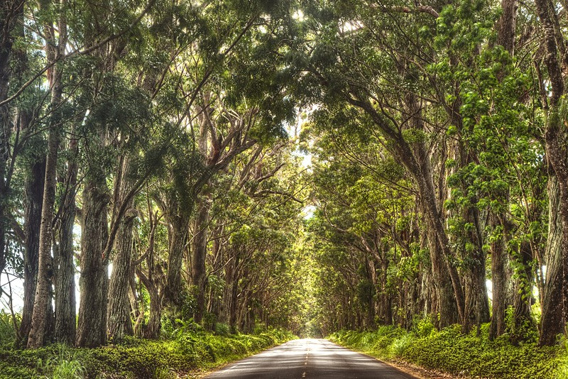 Tree Tunnel in Kauai, Hawaii
