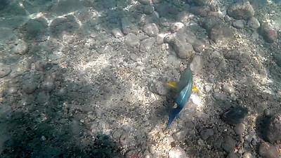 HI underwater-28