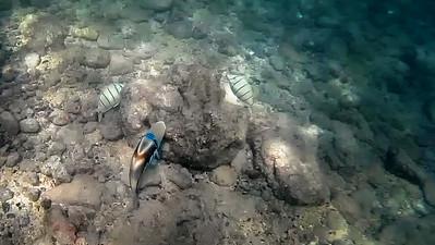 HI underwater-16