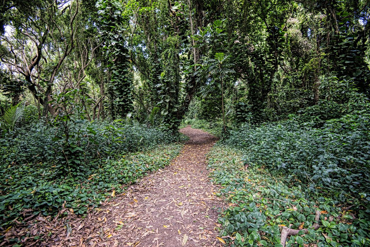 Honolua Bay trail
