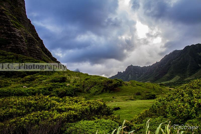 Hawaiian countryside, Oahu