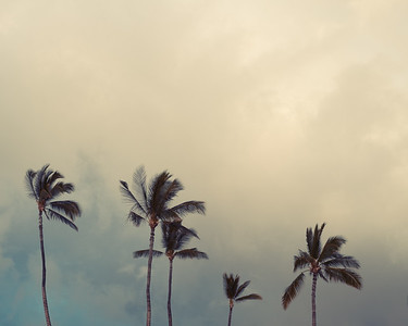 Palm Trees and a Storm rolling in