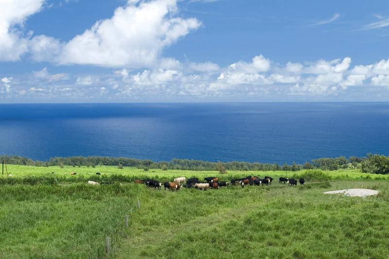 Kona, Hawaii, Big Island, Rachel and I, Hueiu, landscapes,
