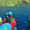 Hawaii, UnCruise Adventures, Kealakeku Bay, Dolphins at Play
