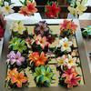Hawaii, UnCruise Adventures, Hapuna Beach, Big Island, Shopping