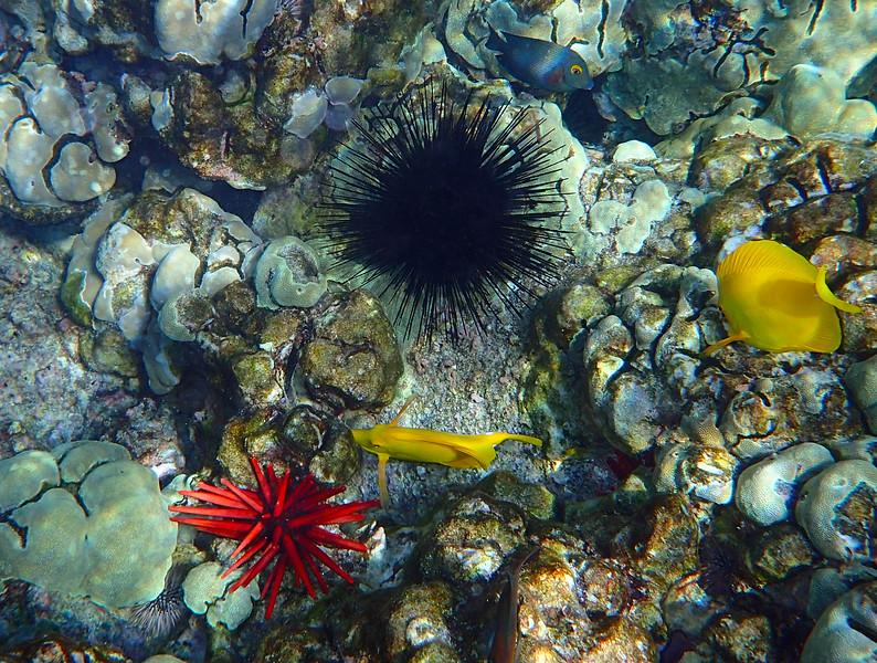 Hawaii, UnCruise Adventures, Big Island, Kealakekua Bay Reef