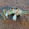 Hawaii, UnCruise Adventures, Sand Crab, Big Island