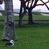 Hawaii, Kauai, Albatross Nesting Site, Makai Golf Club, Princeville