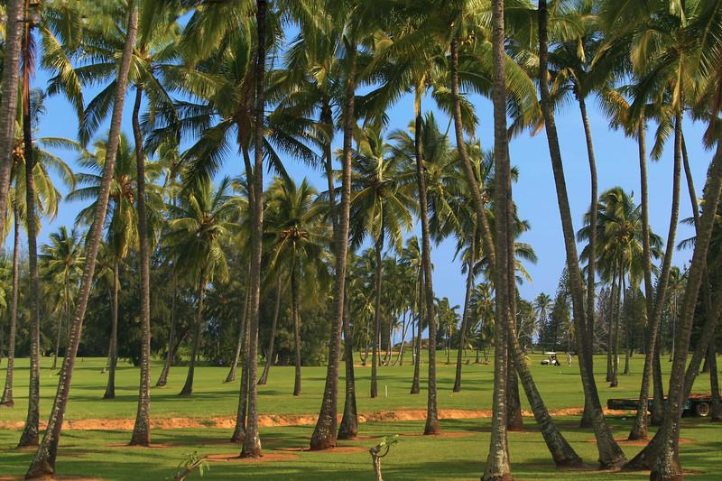 Hawaii, Kauai, Golf Course Palms