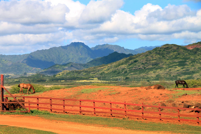 Hawaii, Kauai, CJM Country Stables