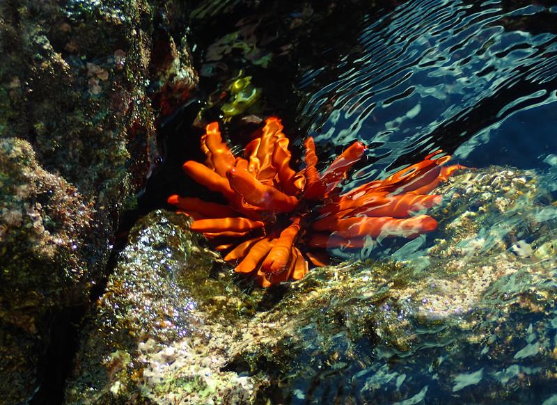 Hawaii, UnCruise Adventures, Maui, Sea Urchin