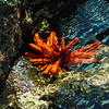 Hawaii, UnCruise Adventures, Maui, Sea Urchin