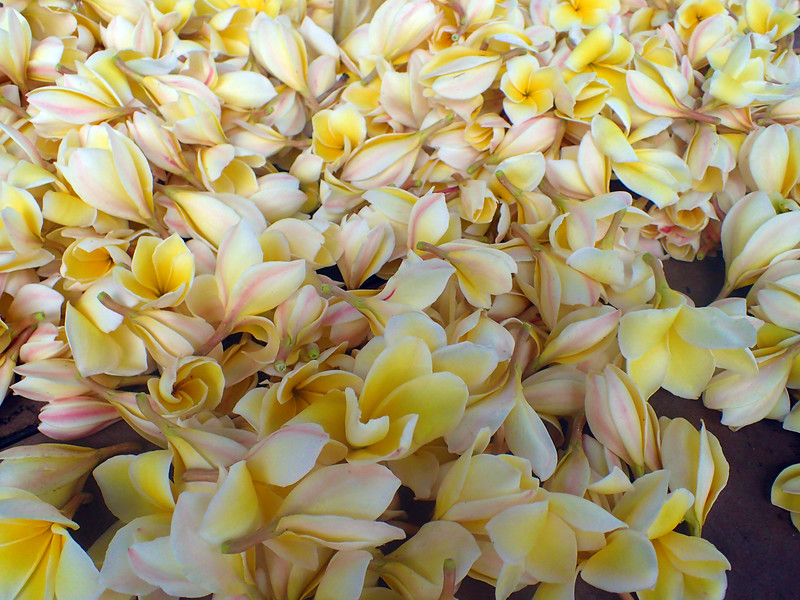 Hawaii, UnCruise Adventures, Sea of Plumeria, Molokai