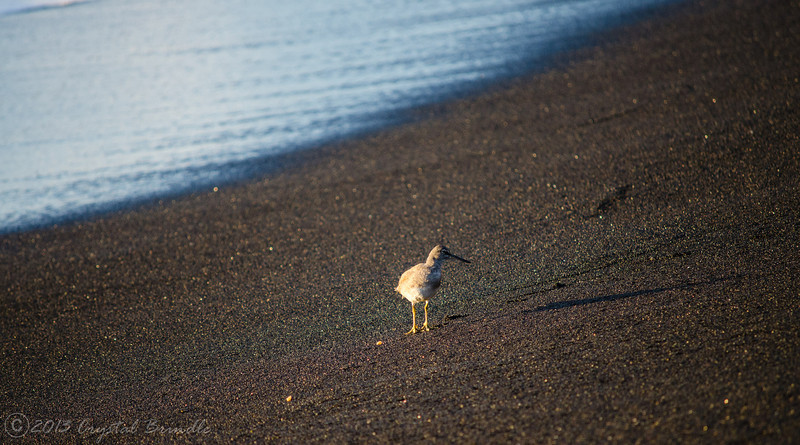 Shorebird and Rainbow Sand