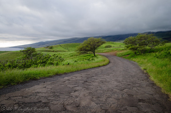 Backroads of Maui