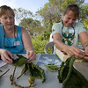 Marie and Vickie work to identify plants for those who brought plant material samples and photos.