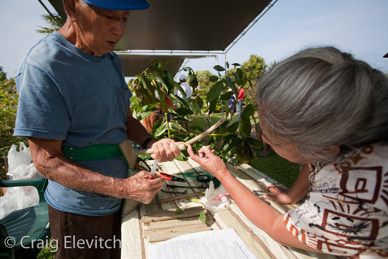 Sunao Kadaooka teaches the art of grafting.