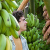 Many were intrigued with the banana fruit display, which featured 15 varieties.