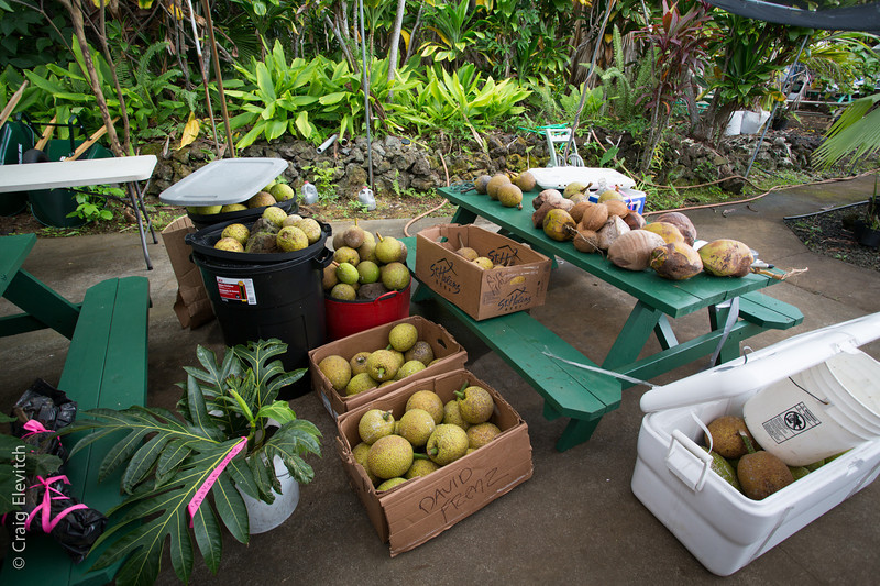 'Ulu fruit was donated from sources in Kona, North Kohala, Hilo, and Puna.