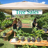 Breadfruit Tree Sales - Ma'afala, Otea, Puaa, and Piipiia varieties available with horticultural experts Heidi Leianuenue Bornhorst and Ian Cole offering growing tips.