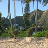 Lanikai Beach in Early Morning (2003)