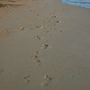 Footprints of Parent & Child on Kailua Beach (2008)