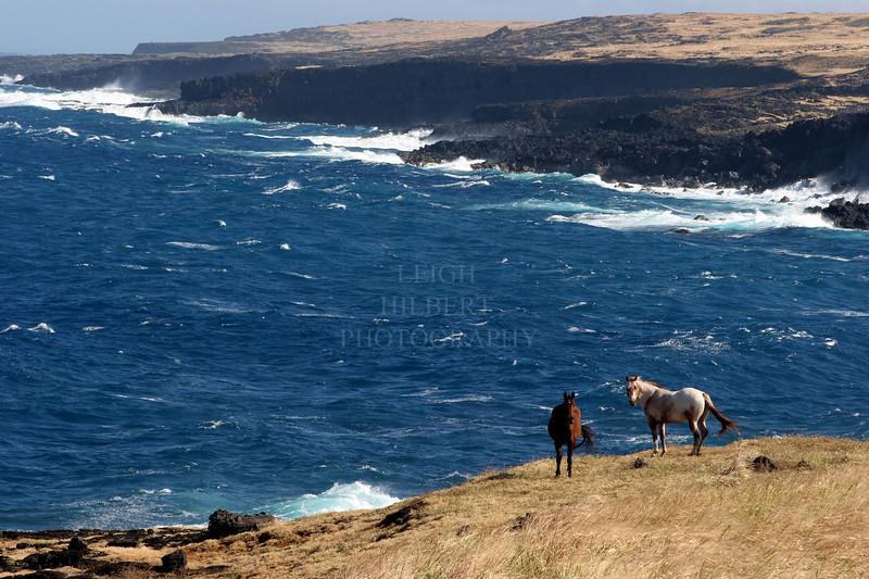 ~ Pahahla Horses ~<br /> <br /> Kau, Big Island<br /> <br /> (Order form # 41)
