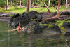 Malama Ki Clay Pond Nymph #2<br /> <br /> A pool created by ocean waves fill a rare clay-based area (Nymphs even rarer :) It is deeper with higher tides. Ironwood and cocopalm trees grow well there.<br /> Island of Hawaii~