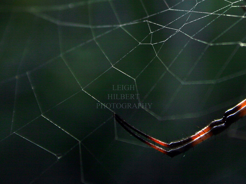 Digital of a Web Master