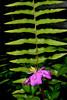Wildflower and fern