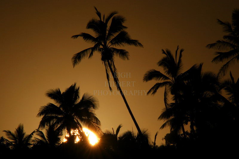 ~ Cocopalm Sunset ~<br /> <br /> Pohoiki shoreline on the Island of Hawaii<br /> <br /> (Order form #1)