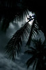 ~ Moonlit Cocopalms ~<br /> <br /> Green Mountain Jungle, Island of Hawaii<br /> <br /> (Order form #51)