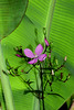 Wildflower and banana leaf